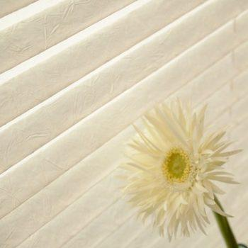 Crusch Vanilla pleated blinds
